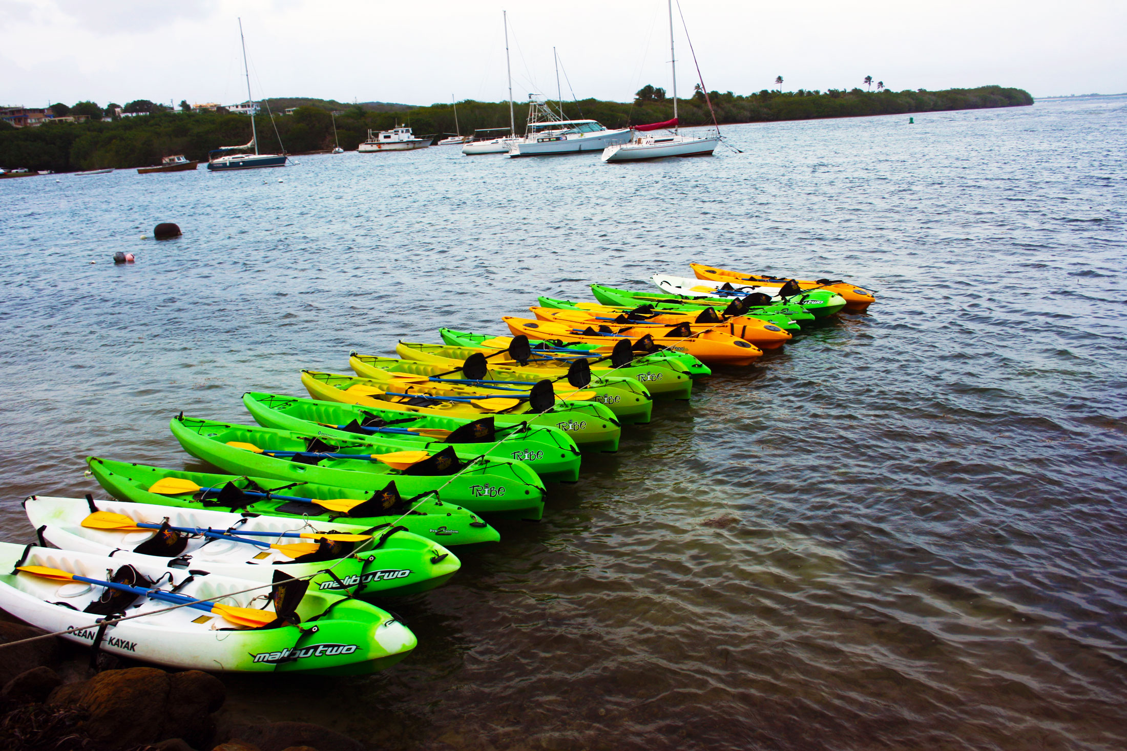 Discover the best Puerto Rico has to offer! ...Sunset Puerto Rico Tours: Kayaks